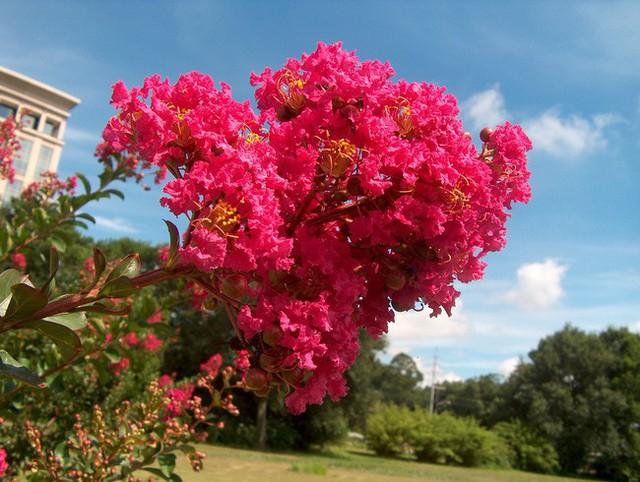 Người sinh vào mùa xuân-hạ-thu-đông nếu chọn đúng các loại cây may mắn bày nơi làm việc và tại nhà sẽ giúp công việc hanh thông, tiền tài đầy túi - Ảnh 2.