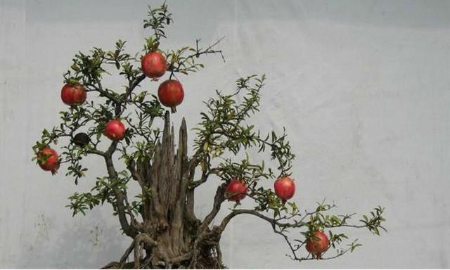 Người sinh vào mùa xuân-hạ-thu-đông nếu chọn đúng các loại cây may mắn bày nơi làm việc và tại nhà sẽ giúp công việc hanh thông, tiền tài đầy túi - Ảnh 6.