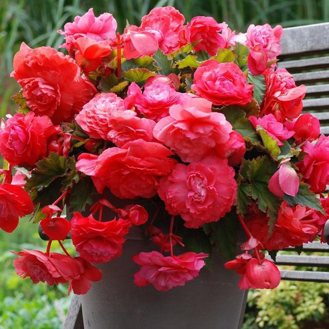 Người sinh vào mùa xuân-hạ-thu-đông nếu chọn đúng các loại cây may mắn bày nơi làm việc và tại nhà sẽ giúp công việc hanh thông, tiền tài đầy túi - Ảnh 7.
