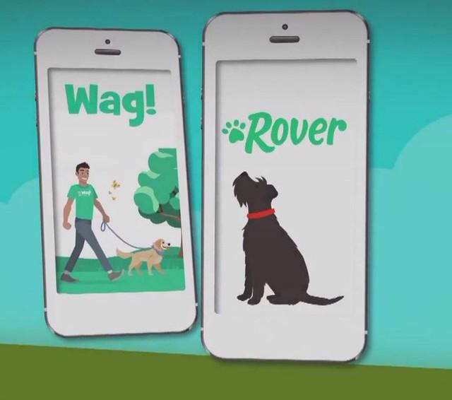 Từ ngưỡng cửa của một điều vĩ đại, startup dắt chó đi dạo Wag đã tuột dây và suy sụp như thế nào - Ảnh 2.