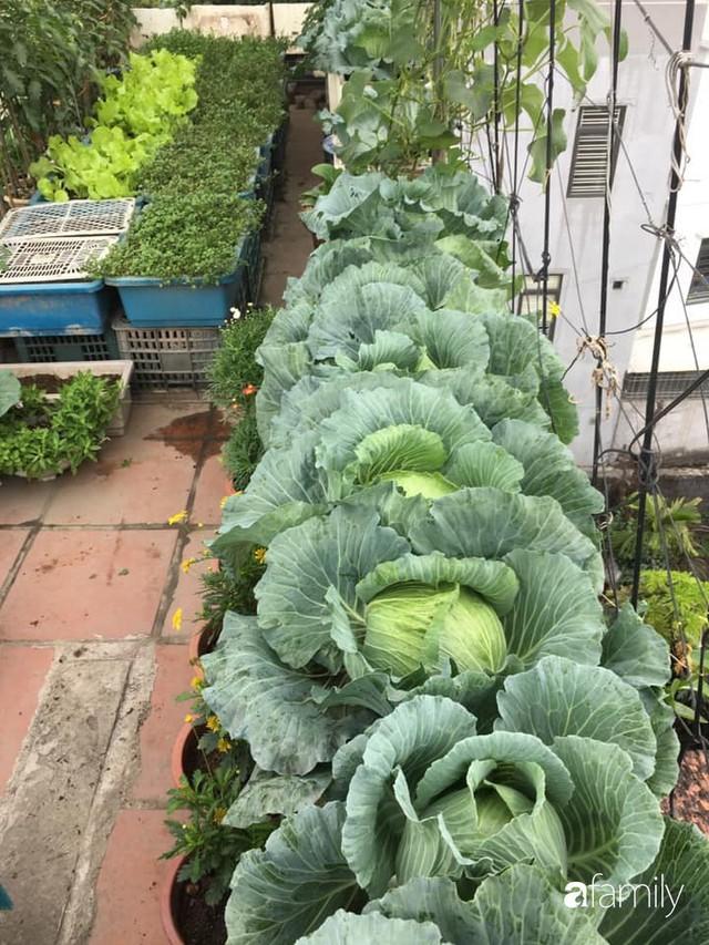 Sân thượng 40m² nhưng không khác gì một trang trại thu nhỏ của mẹ đảm ở Quảng Ninh - Ảnh 14.