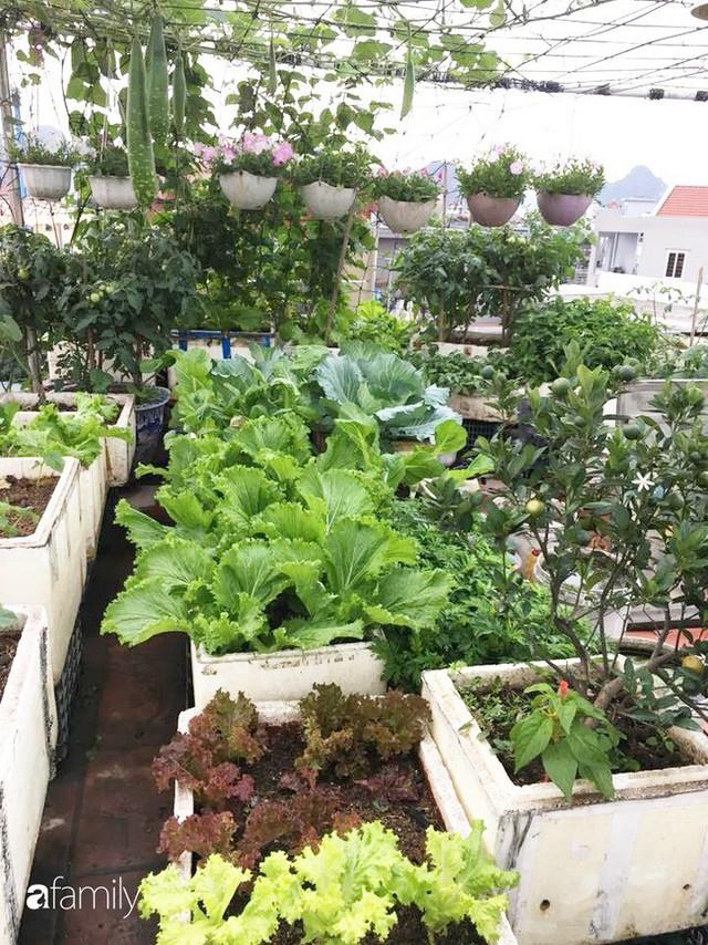 Sân thượng 40m² nhưng không khác gì một trang trại thu nhỏ của mẹ đảm ở Quảng Ninh - Ảnh 18.