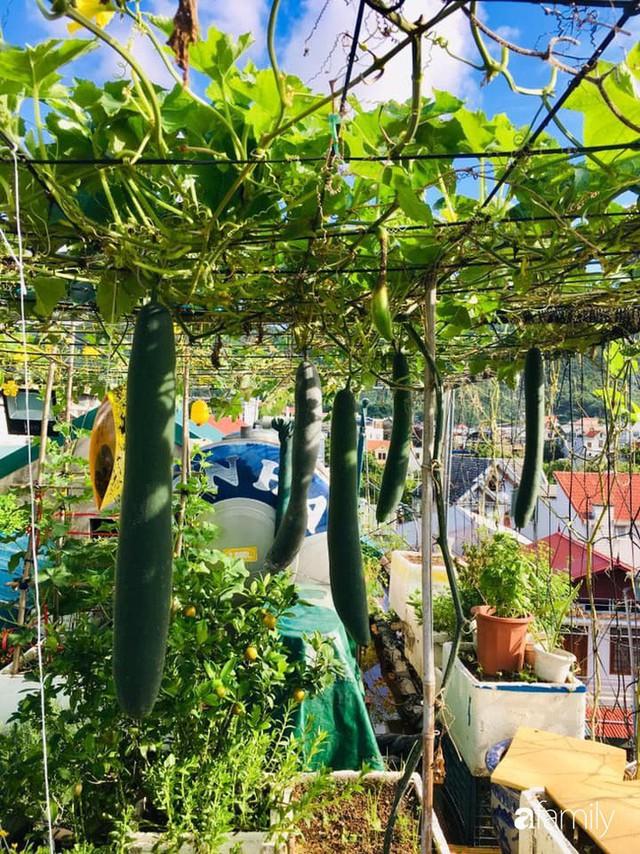 Sân thượng 40m² nhưng không khác gì một trang trại thu nhỏ của mẹ đảm ở Quảng Ninh - Ảnh 3.