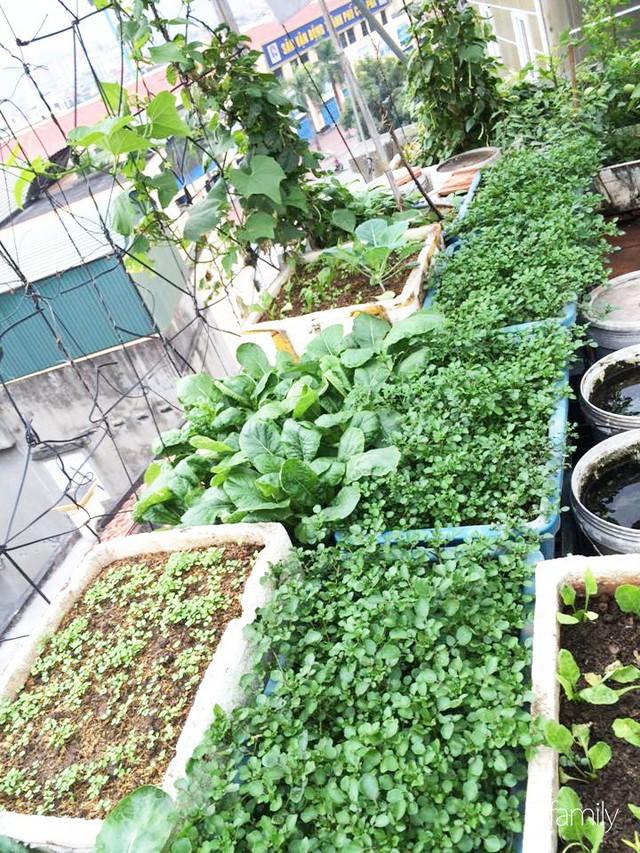 Sân thượng 40m² nhưng không khác gì một trang trại thu nhỏ của mẹ đảm ở Quảng Ninh - Ảnh 28.