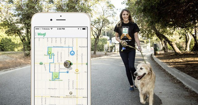 Từ ngưỡng cửa của một điều vĩ đại, startup dắt chó đi dạo Wag đã tuột dây và suy sụp như thế nào - Ảnh 4.