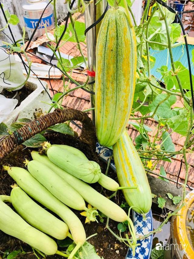 Sân thượng 40m² nhưng không khác gì một trang trại thu nhỏ của mẹ đảm ở Quảng Ninh - Ảnh 5.