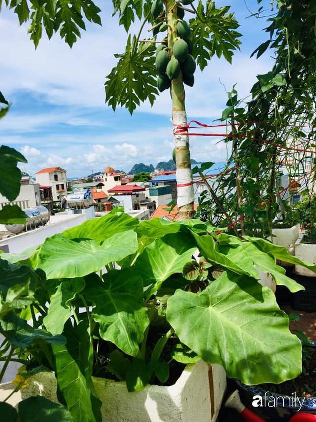 Sân thượng 40m² nhưng không khác gì một trang trại thu nhỏ của mẹ đảm ở Quảng Ninh - Ảnh 6.