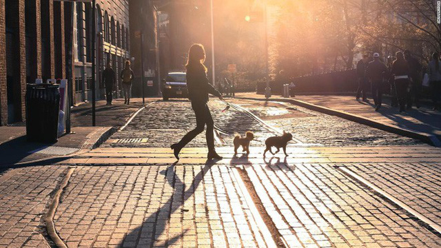Từ ngưỡng cửa của một điều vĩ đại, startup dắt chó đi dạo Wag đã tuột dây và suy sụp như thế nào - Ảnh 9.