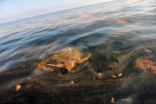 Rùng mình những vụ xả thải gây ô nhiễm nước trên thế giới - Ảnh 2.