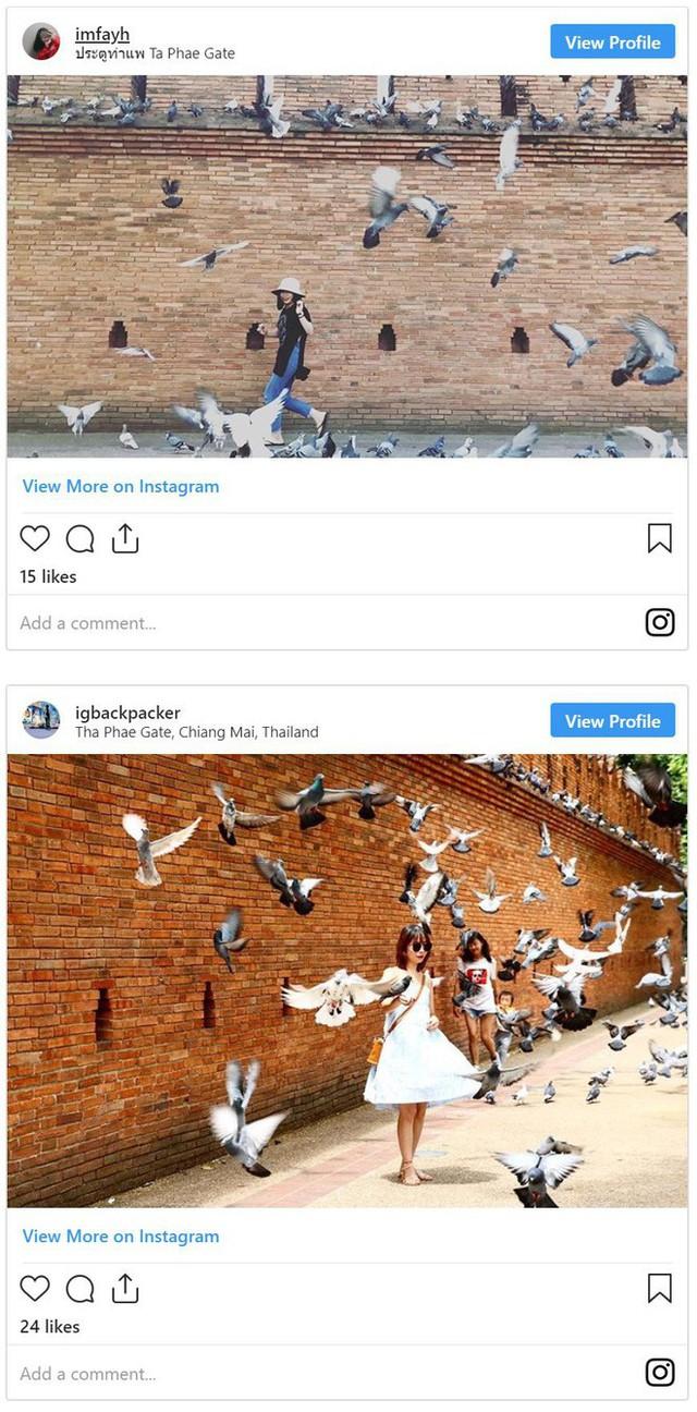 Nghề quái đản nhưng ra tiền ở Thái Lan: Dọa chim bay để du khách chụp hình - Ảnh 2.