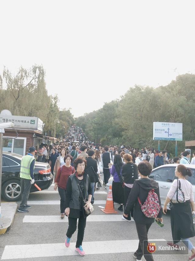 Dân tình check in rần rần đồi cỏ hồng Hàn Quốc, đến khi xem sự thật mới ngỡ ngàng vì đông đến phũ phàng - Ảnh 15.