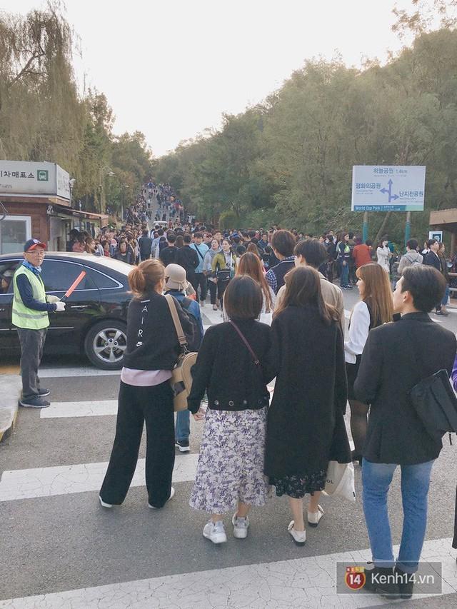 Dân tình check in rần rần đồi cỏ hồng Hàn Quốc, đến khi xem sự thật mới ngỡ ngàng vì đông đến phũ phàng - Ảnh 16.