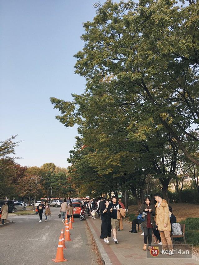 Dân tình check in rần rần đồi cỏ hồng Hàn Quốc, đến khi xem sự thật mới ngỡ ngàng vì đông đến phũ phàng - Ảnh 17.
