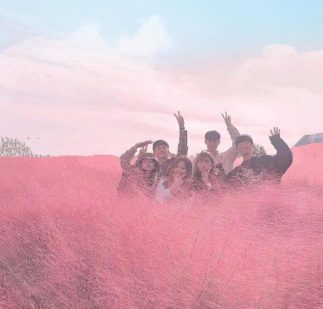Dân tình check in rần rần đồi cỏ hồng Hàn Quốc, đến khi xem sự thật mới ngỡ ngàng vì đông đến phũ phàng - Ảnh 6.