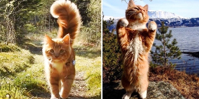 [Bài CN] Hóa ra các boss mèo không 'nuôi tốn cơm' như chúng ta nghĩ: Bạn có thể nghỉ việc để ở nhà đăng ảnh chúng trên MXH, mỗi bài đăng kiếm được cả nghìn USD! - Ảnh 4.