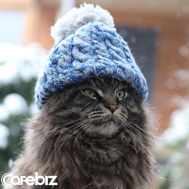 [Bài CN] Hóa ra các boss mèo không 'nuôi tốn cơm' như chúng ta nghĩ: Bạn có thể nghỉ việc để ở nhà đăng ảnh chúng trên MXH, mỗi bài đăng kiếm được cả nghìn USD! - Ảnh 5.