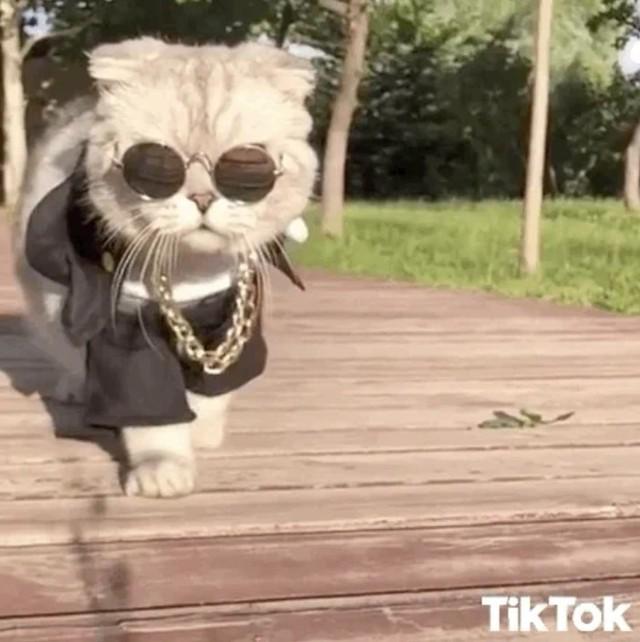 [Bài CN] Hóa ra các boss mèo không 'nuôi tốn cơm' như chúng ta nghĩ: Bạn có thể nghỉ việc để ở nhà đăng ảnh chúng trên MXH, mỗi bài đăng kiếm được cả nghìn USD! - Ảnh 1.