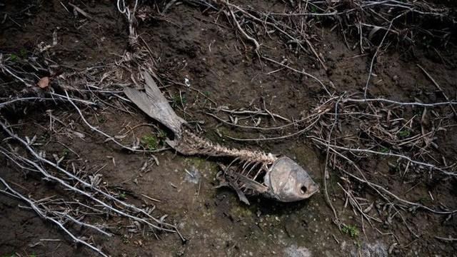 Làn sóng tuyệt chủng nhân tạo: Con người đã hủy diệt một nửa sự sống trên Trái Đất - Ảnh 1.