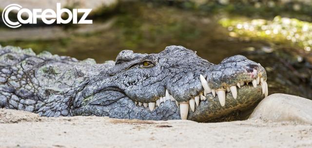 """Cá sấu già nằm lỳ nhưng bắt được linh dương, cá sấu trẻ bơi mãi chỉ tìm được chú chim nhỏ và bài học về sức mạnh của """"không làm gì"""" - Ảnh 1."""