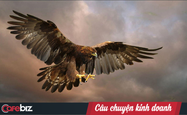 CEO Thái Hà Books: Người có tố chất lãnh đạo là người vượt qua khủng hoảng và chịu được cô đơn, bạn muốn làm Đại bàng vượt bão đi lên hay chỉ là Kền kền ăn xác chết để sống? - Ảnh 1.