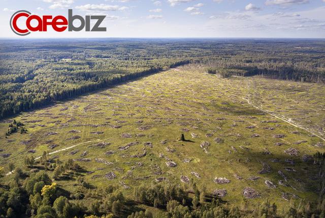 Ngạc nhiên chưa: Không phải Amazon, Nga mới là lá phổi xanh của thế giới - Ảnh 2.