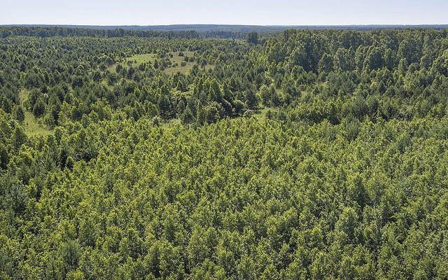 Ngạc nhiên chưa: Không phải Amazon, Nga mới là lá phổi xanh của thế giới