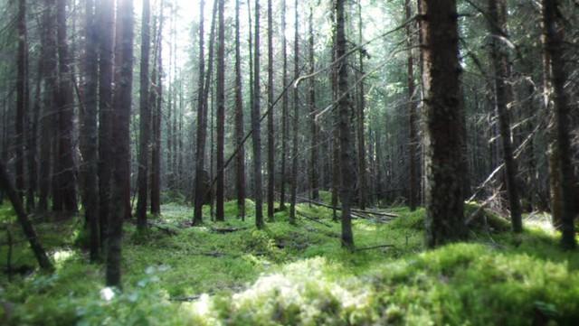 Ngạc nhiên chưa: Không phải Amazon, Nga mới là lá phổi xanh của thế giới - Ảnh 1.