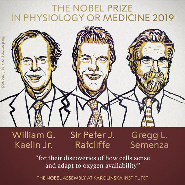 Giải Nobel đầu tiên năm 2019 vừa có chủ nhân: Vinh danh ba nhà khoa học phát hiện ra cơ chế thích nghi oxy của tế bào - Ảnh 1.