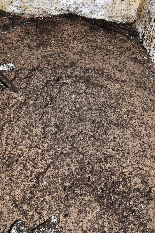 Bốn triệu con kiến bị mắc kẹt dưới hầm hạt nhân thời Liên Xô, chúng đã làm thế nào để sống? - Ảnh 1.