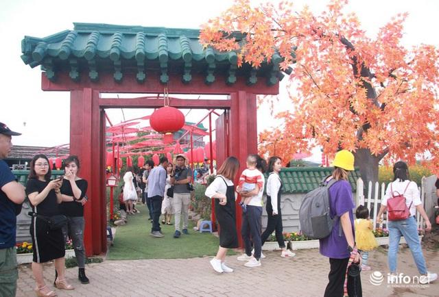 Tắc đường vào vườn hoa Nhật Tân dịp cuối tuần khi dân đổ xô đi chụp cúc họa mi - Ảnh 4.