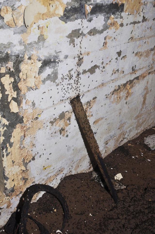 Bốn triệu con kiến bị mắc kẹt dưới hầm hạt nhân thời Liên Xô, chúng đã làm thế nào để sống? - Ảnh 3.