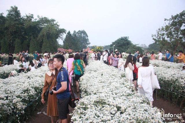 Tắc đường vào vườn hoa Nhật Tân dịp cuối tuần khi dân đổ xô đi chụp cúc họa mi - Ảnh 5.