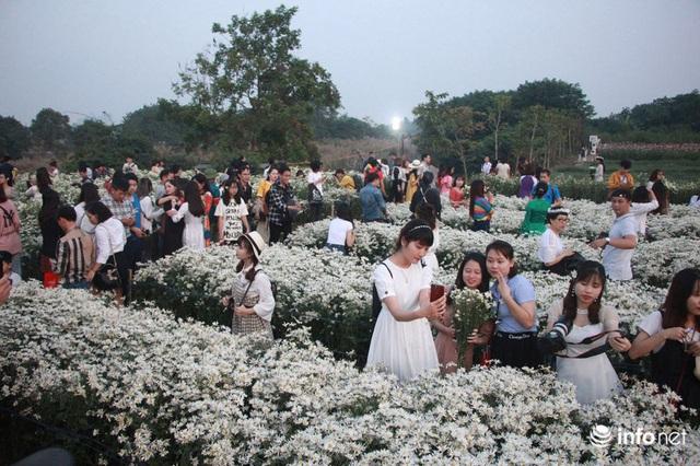 Tắc đường vào vườn hoa Nhật Tân dịp cuối tuần khi dân đổ xô đi chụp cúc họa mi - Ảnh 6.