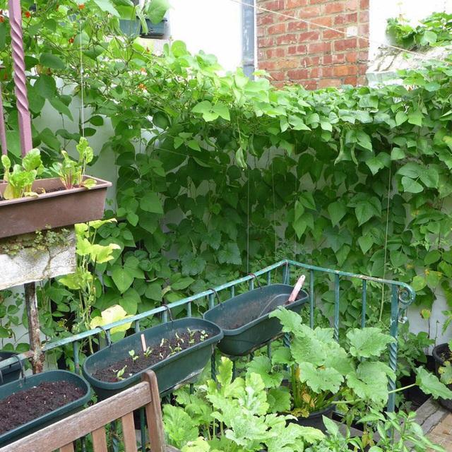 Tận dụng mảnh đất nhỏ phía sau nhà, người đàn ông đảm đang trồng đủ loại rau quả sạch cho cả nhà thưởng thức - Ảnh 11.