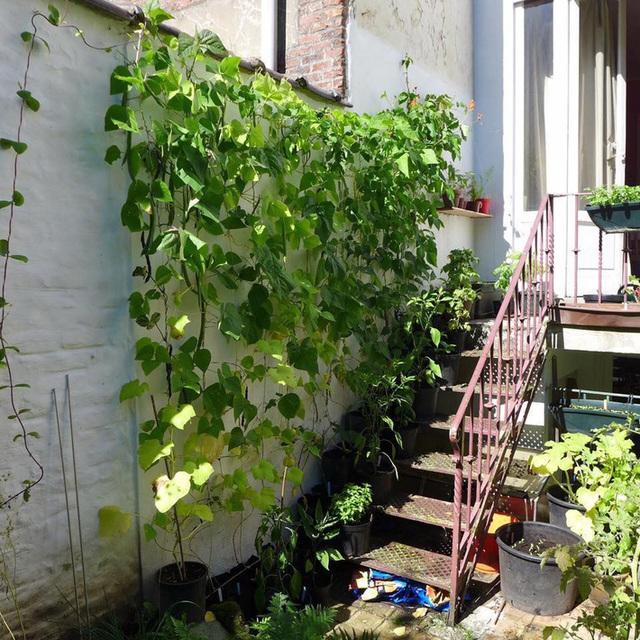 Tận dụng mảnh đất nhỏ phía sau nhà, người đàn ông đảm đang trồng đủ loại rau quả sạch cho cả nhà thưởng thức - Ảnh 12.