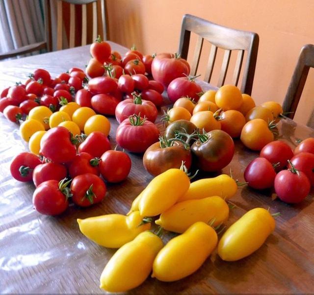 Tận dụng mảnh đất nhỏ phía sau nhà, người đàn ông đảm đang trồng đủ loại rau quả sạch cho cả nhà thưởng thức - Ảnh 13.