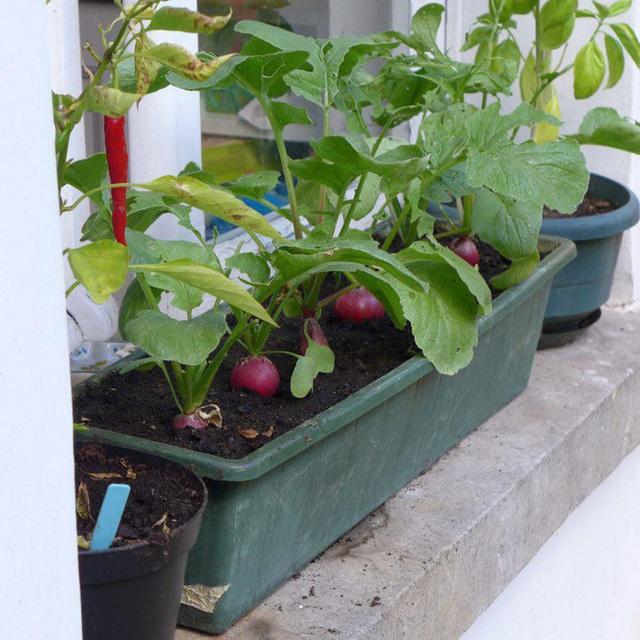 Tận dụng mảnh đất nhỏ phía sau nhà, người đàn ông đảm đang trồng đủ loại rau quả sạch cho cả nhà thưởng thức - Ảnh 14.