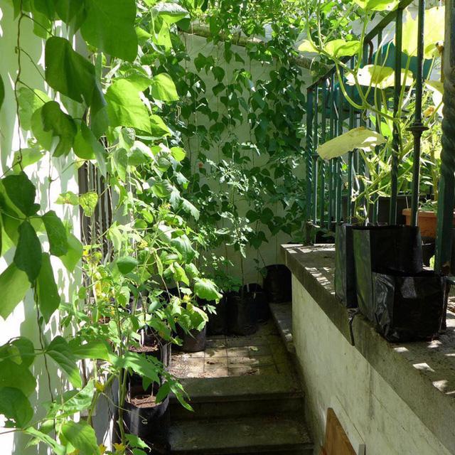 Tận dụng mảnh đất nhỏ phía sau nhà, người đàn ông đảm đang trồng đủ loại rau quả sạch cho cả nhà thưởng thức - Ảnh 15.