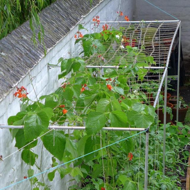 Tận dụng mảnh đất nhỏ phía sau nhà, người đàn ông đảm đang trồng đủ loại rau quả sạch cho cả nhà thưởng thức - Ảnh 4.