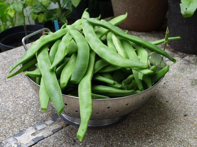 Tận dụng mảnh đất nhỏ phía sau nhà, người đàn ông đảm đang trồng đủ loại rau quả sạch cho cả nhà thưởng thức - Ảnh 8.