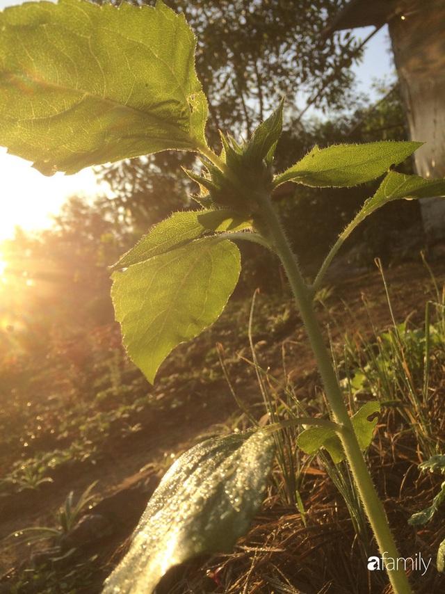 Câu chuyện của hai cô gái 9x về Hà Tĩnh mở trang trại rau quả sạch và giấc mơ sống gần hơn với thiên nhiên - Ảnh 15.