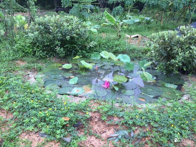 Câu chuyện của hai cô gái 9x về Hà Tĩnh mở trang trại rau quả sạch và giấc mơ sống gần hơn với thiên nhiên - Ảnh 17.