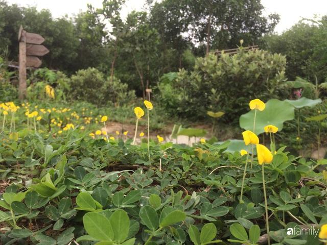 Câu chuyện của hai cô gái 9x về Hà Tĩnh mở trang trại rau quả sạch và giấc mơ sống gần hơn với thiên nhiên  - Ảnh 22.