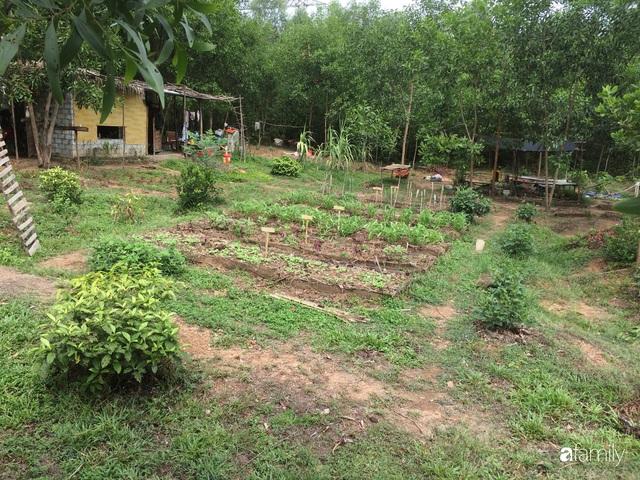 Câu chuyện của hai cô gái 9x về Hà Tĩnh mở trang trại rau quả sạch và giấc mơ sống gần hơn với thiên nhiên - Ảnh 26.