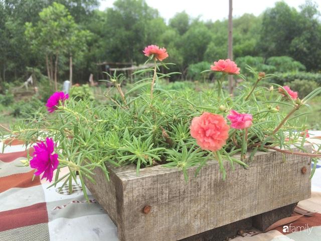 Câu chuyện của hai cô gái 9x về Hà Tĩnh mở trang trại rau quả sạch và giấc mơ sống gần hơn với thiên nhiên  - Ảnh 28.