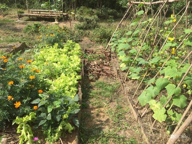 Câu chuyện của hai cô gái 9x về Hà Tĩnh mở trang trại rau quả sạch và giấc mơ sống gần hơn với thiên nhiên - Ảnh 4.