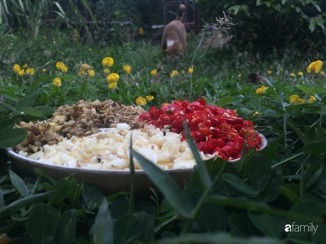 Câu chuyện của hai cô gái 9x về Hà Tĩnh mở trang trại rau quả sạch và giấc mơ sống gần hơn với thiên nhiên - Ảnh 33.