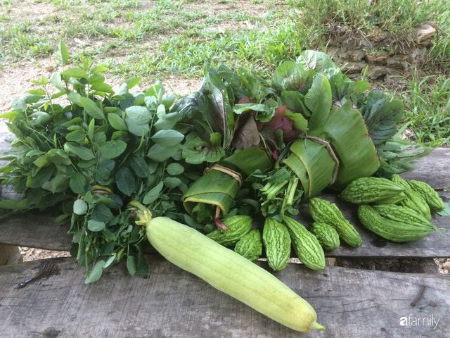 Câu chuyện của hai cô gái 9x về Hà Tĩnh mở trang trại rau quả sạch và giấc mơ sống gần hơn với thiên nhiên  - Ảnh 36.