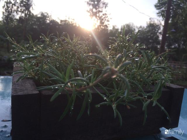 Câu chuyện của hai cô gái 9x về Hà Tĩnh mở trang trại rau quả sạch và giấc mơ sống gần hơn với thiên nhiên  - Ảnh 38.