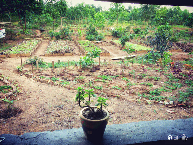 Câu chuyện của hai cô gái 9x về Hà Tĩnh mở trang trại rau quả sạch và giấc mơ sống gần hơn với thiên nhiên  - Ảnh 5.